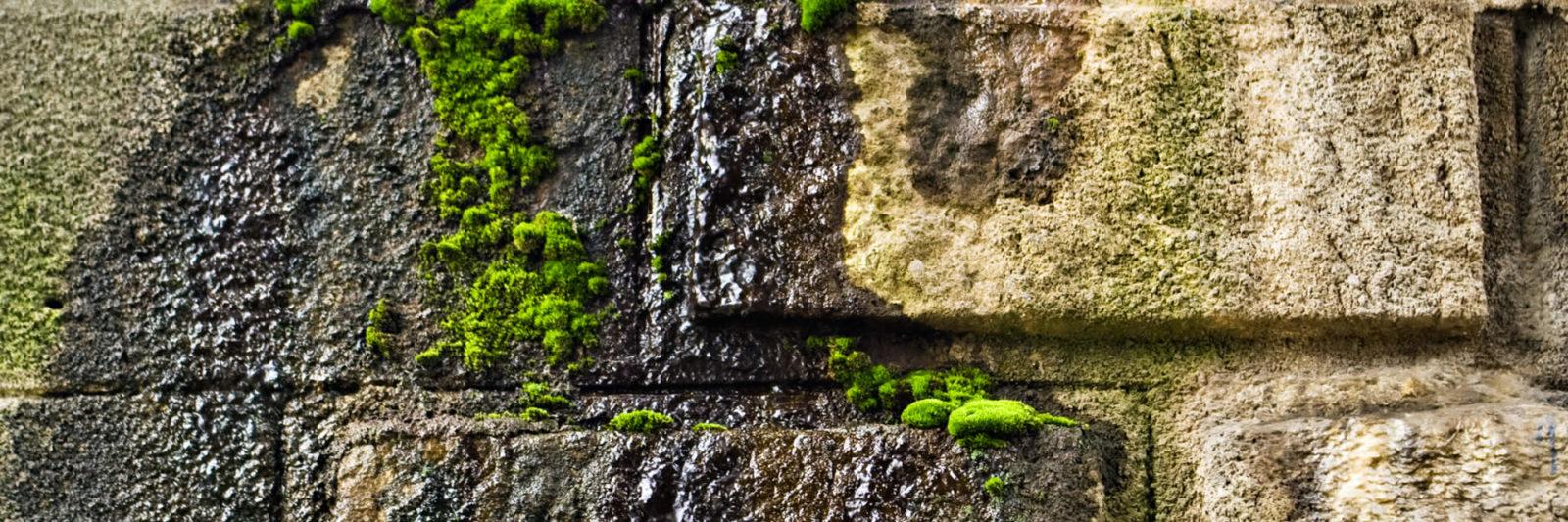 algaangroei muur